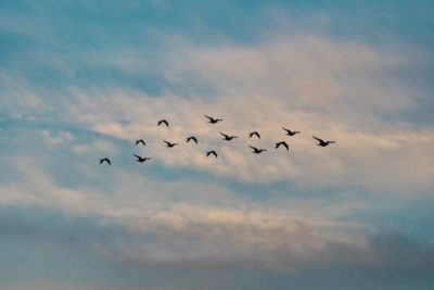 evening-evening-sky-flock-of-birds-1553463-e1558368750169-400x267