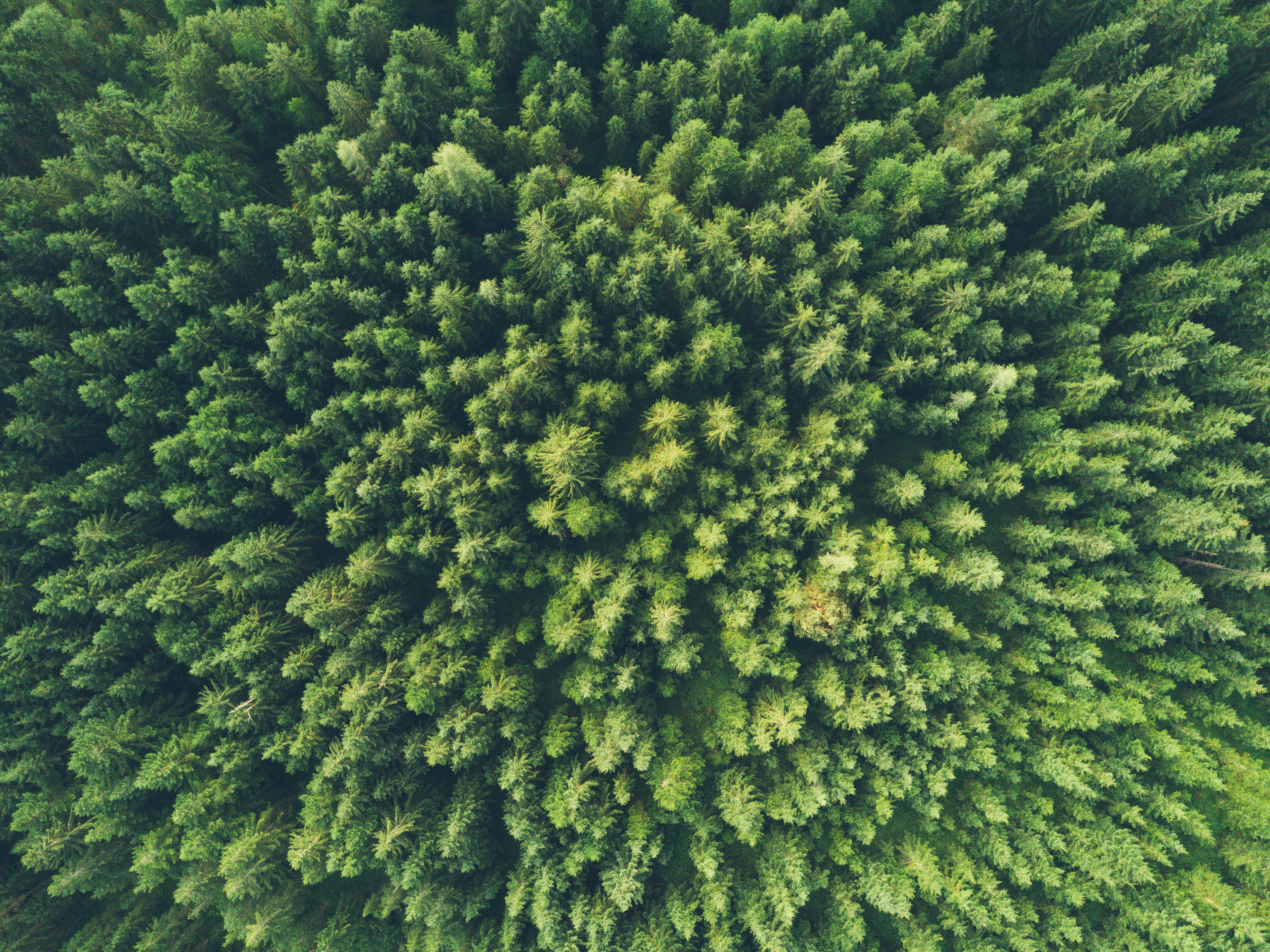 a forest shot from above